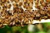 Bienenbäume der Zukunft mit  Herrn Klaus Körber