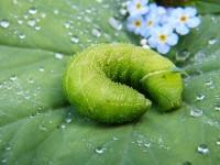 Pflanzenschutzabend (Pflanzenschutz im Obstbau)